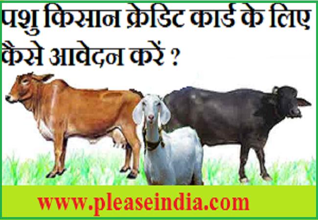 पशु किसान क्रेडिट कार्ड कैसे बनवाएं